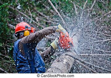 profesional, Leñador, corte, grande, árbol,...