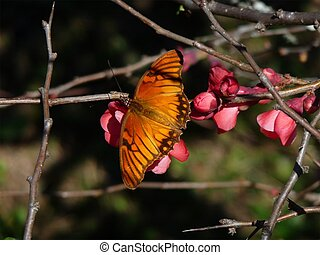 Monarch Butterfly and Flowering Bush - a monarch butterfly...