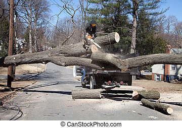 Cutting tree - Man working on cutting uprooted tree blocking...