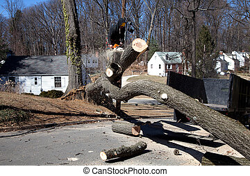 Tree removal - Man working on cutting uprooted tree blocking...