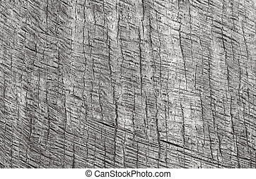 Palm tree trunk background texture