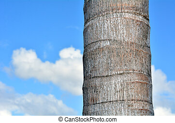 Palm tree trunk against blue sky