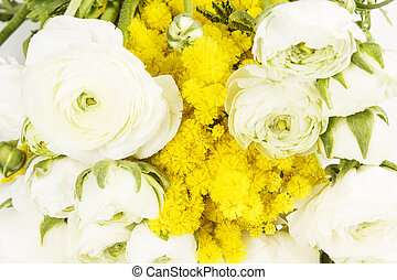 mimosa - Twig of mimosa and roses flowers isolated on white