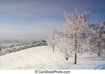 Winter landscape with pines snow covered