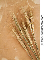 paper with wheat and rye ears - paper with wheat and rye...