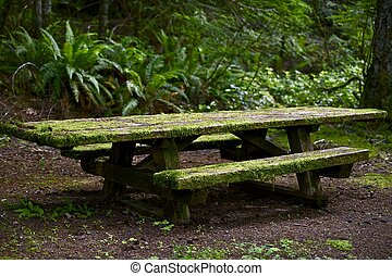 Mossy Bench in the Mossy Northwest Olympic Peninsula Forest.