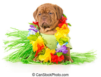 hula dog - dogue de bordeaux wearing grass skirt and lei