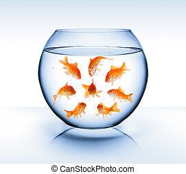 goldfish - diversity concept, bullying and isolation