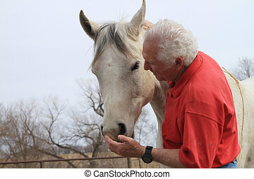 Man with hand at horses mouth - Middle aged man with hand at...
