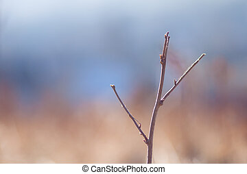 Simple branch with beautifull bokeh