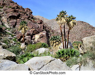 Palm Canyon in Anza-Borrego - Palm Canyon in the...