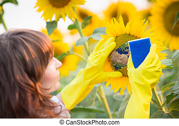 Woman cleaning sunflower