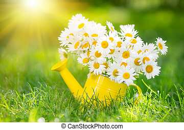 Spring flowers - Beautiful bunch of spring flowers in...