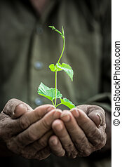 Young plant in old hands against green background - Senior...