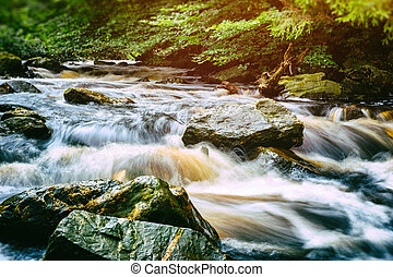 Forest stream at summer day