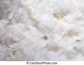 White Feathers - Close-Up of Pile of White Fluffy Feathers