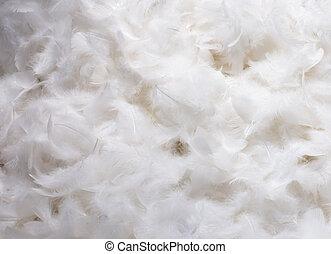blanco, plumas