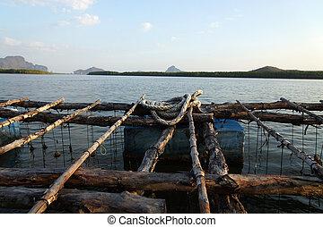 Oyster Farming, Thailand.