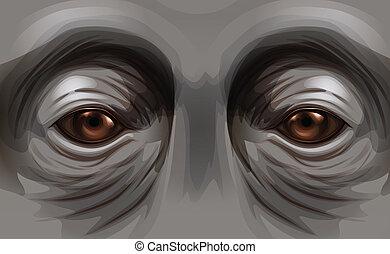 ojos, orangután
