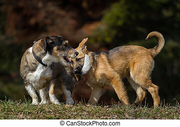 Hearty - A German Shepherd puppy biting a hearty fellows in...