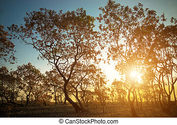 Silhouettes dead trees at Savanna grasslands, Phang Nga,...