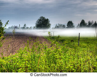Fogginess in the field - Morning landscape on the field...