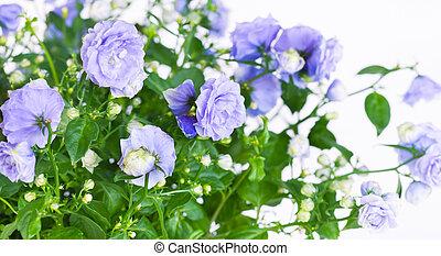 blå, Uppe, Klockblomma,  terry, nära, Blomstrar