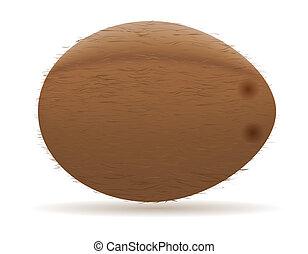 coconut vector illustration