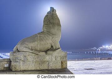 Sea Lion in Mar del Plata, Buenos Aires, Argentina - Lobo...