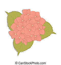 beautiful flower hydrangea isolated on white background....