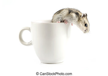 Little hamster going out a white cup