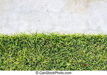 natural real green grass field background