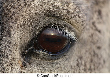 Close up of horse eye - Close up of beautiful horse eye