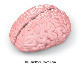 Human brain on white isolated background 3d