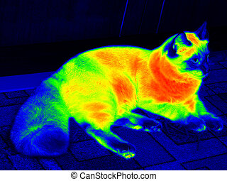 Infrared ragdoll cat