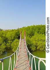 Suspension bridge in mangrove forest, tropical site