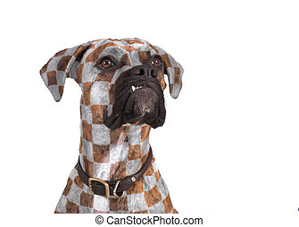 dog with style - dog with flamboyant checker pattern
