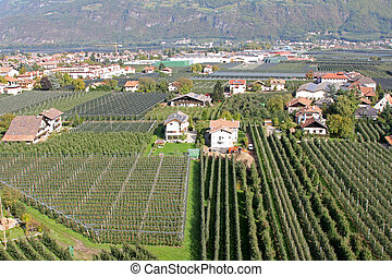 Apple Orchard in Italy - Apple Orchard in Trentino-Alto...