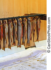 Hanging Trouts with gills and entrails removed. They are to...