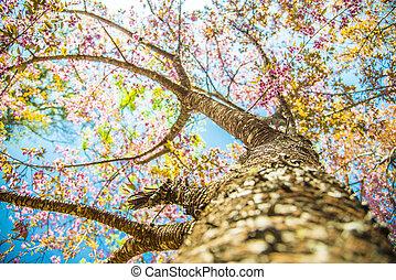 Under branch of pink cherry tree4
