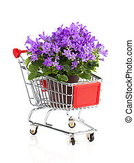blue campanula flowers in a Shopping cart, on white...