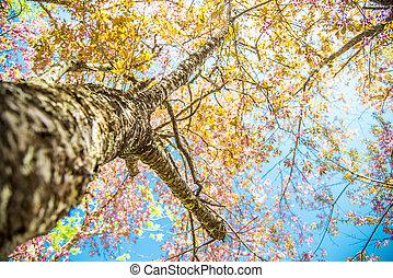 Under branch of pink cherry tree2