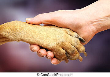 Handshake - Dog paw and female hand doing handshake
