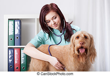 Dog examined by female vet - Standing dog examined by female...