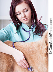 Female vet examining dog