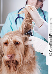 Vet examining dog with otoscope