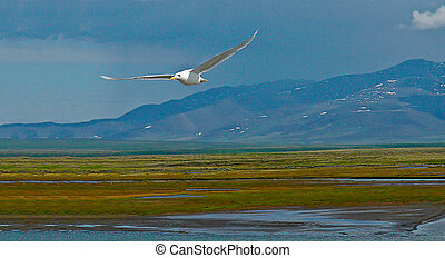 Seagull on a background of the summer tundra.