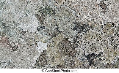 abstract lichen detail