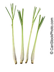 Fresh Lemongrass isolated - Fresh Lemongrass isolated on...