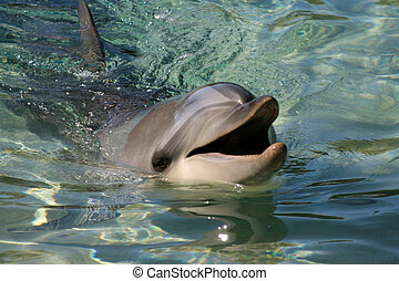 dolphin - a dolphin smiles for the camera